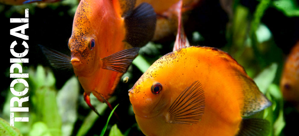 Tropical fish by the uk 39 s no 1 online for Order fish online
