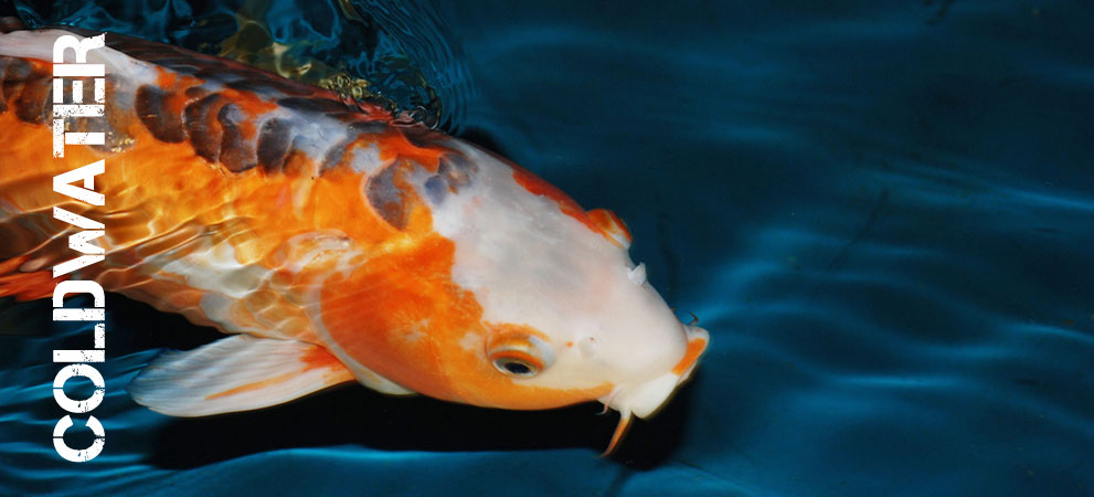 Tropical fish by the uk 39 s no 1 online for Where to buy fish online