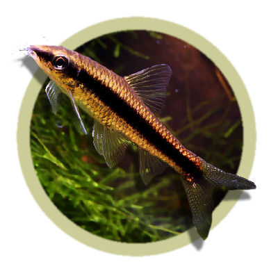 Uks No 1 Online Tropical Fish Store